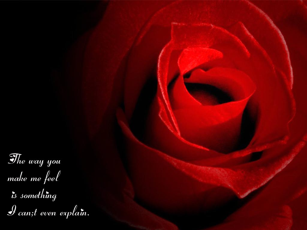 I Love You Quotes With Roses : Love Rose Wallpaper With Love Quotes