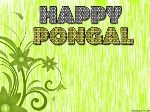Pongal Wishes 2013